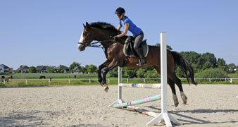 Reiterin auf Pferd beim Springkurs