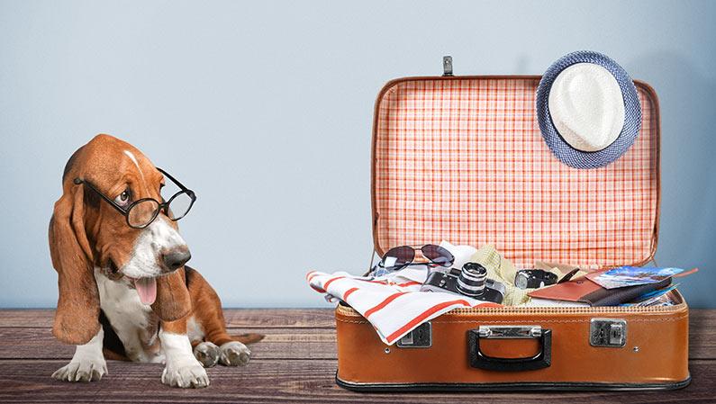 Reisetipps für Urlaub mit Hund