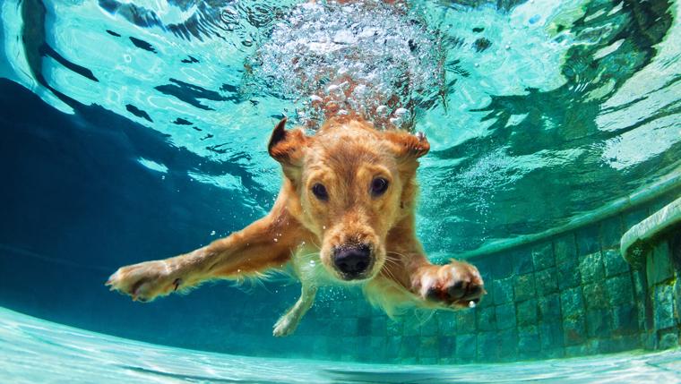 Sommerurlaub mit Hund: Die top 5 Badeseen in Tirol für Sie und Ihre Fellnase