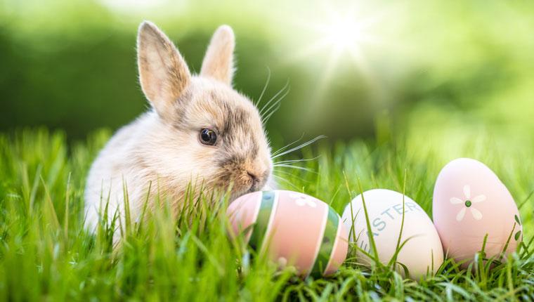 Der Speckbacher Hof wünscht Ihnen Frohe Ostern!